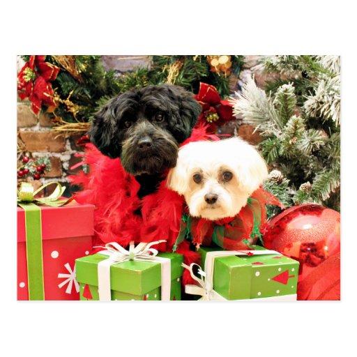 Navidad - maltés - Annie y YorkiePoo - Hannah Postales