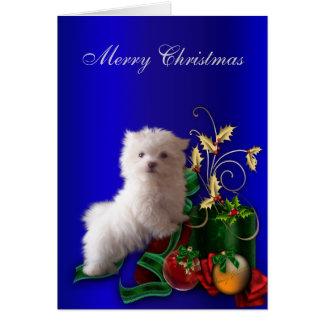 Navidad maltés del perro de perrito felicitaciones