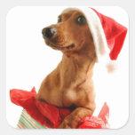 Navidad mismo de un Doxie Pegatina Cuadrada