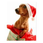 Navidad mismo de un Doxie Postal
