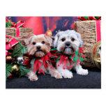 Navidad - Morkie - Jackie y Tabby Tarjeta Postal