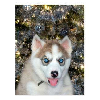 Navidad observado azul del husky siberiano tarjeta postal