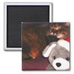 Navidad oso e imán del gato
