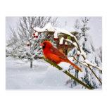 Navidad, pájaro cardinal, nieve, postal