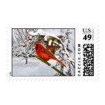 Navidad, pájaro cardinal, nieve, sello