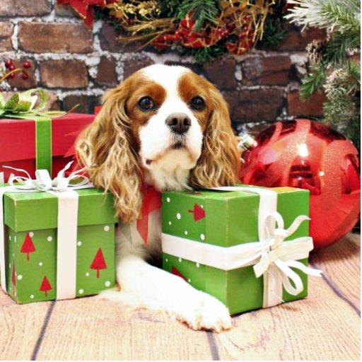 Navidad - perro de aguas de rey Charles arrogante  Fotoescultura Vertical