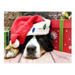 Navidad - perro de montaña de Bernese - Mya Postal