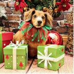 Navidad - perro de patas muy cortas - Heidi Escultura Fotográfica