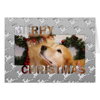 Navidad Photocard de los perros perdigueros de oro