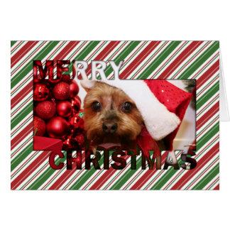 Navidad Photocard de Yorkshire Terrier Tarjeta