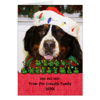 Navidad Photocard del perro de montaña de Bernese Felicitacion