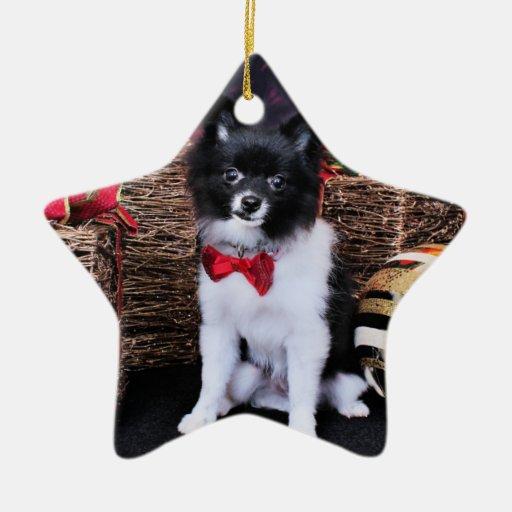 Navidad - Pomeranian - Willy Adorno De Cerámica En Forma De Estrella