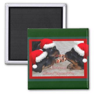 Navidad Rottweilers: Una época del donante feliz Imán Cuadrado
