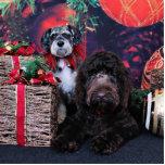Navidad - Schnauzer Apache - Bowen LabraDoodle Esculturas Fotográficas