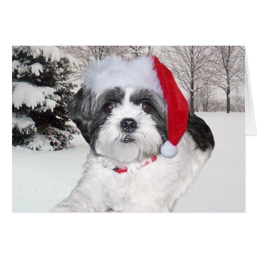 Navidad Shih Tzu Tarjeta De Felicitación