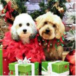 Navidad - ShihPoo - Sophie y Twix Escultura Fotografica