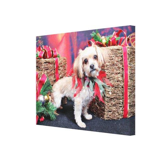 Navidad - Shorkie - Charlie Lona Envuelta Para Galerías