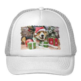 Navidad - St Bernard Aussie X - Bailey Gorras