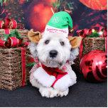 Navidad - Terrier de trigo - peluche Escultura Fotografica