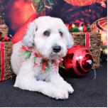 Navidad - Terrier de trigo - peluche Escultura Fotográfica