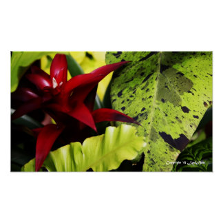 Navidad tropical poster