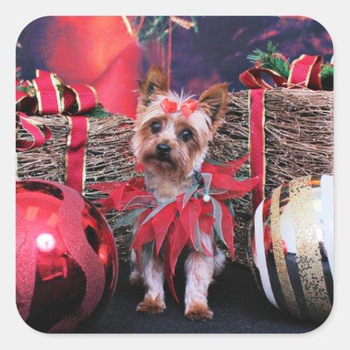 Navidad - Yorkie - Junie Calcomania Cuadradas