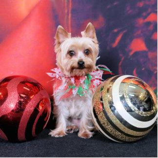 Navidad - Yorkie - Tasha Esculturas Fotográficas