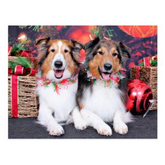 Navidad - Zena y embalador - Shelties Tarjeta Postal