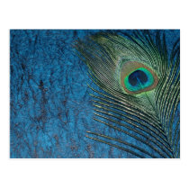 Navy Peacock Postcard