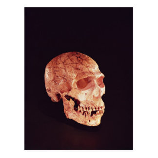 Neanderthal Skull, discovered on Mt Carmel Postcard