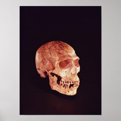 Neanderthal Skull, discovered on Mt Carmel Poster