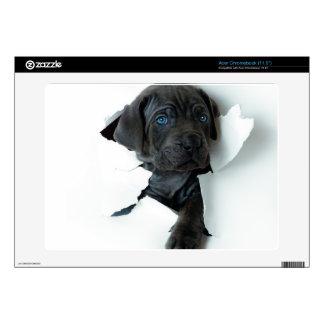 Neapolitan Mastiff black dog  Tearing Through Decal For Acer Chromebook