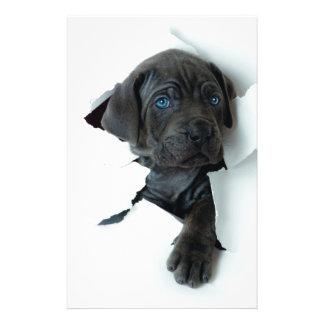 Neapolitan Mastiff black dog  Tearing Through Flyer