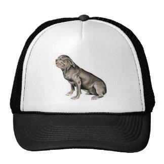 Neapolitan Mastiff Mesh Hats