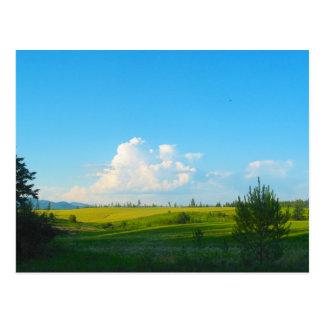 Near Moscow Idaho Postcard