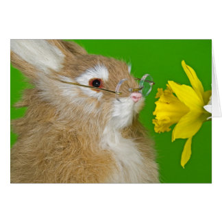 Nearsighted Hare Card