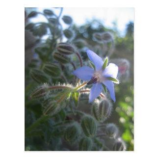 Neblina azul de la flor tarjetas postales