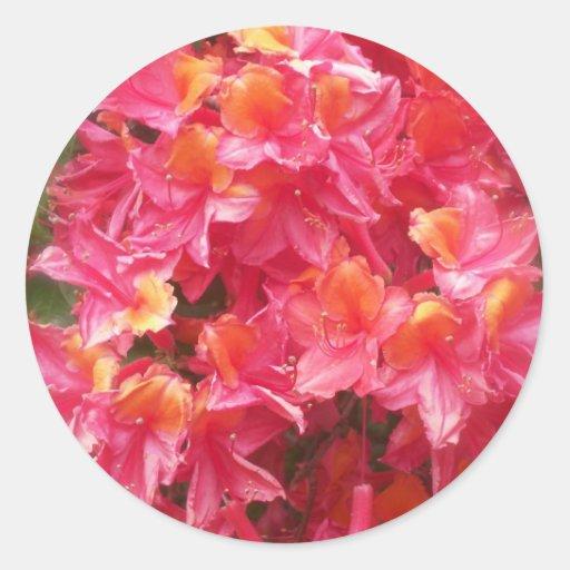 Neblina del rododendro pegatina redonda