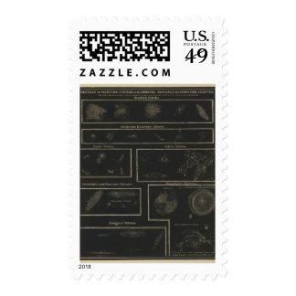 Nebulae Stamp
