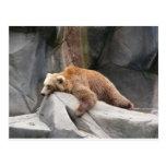Necesidades del oso tarjeta postal