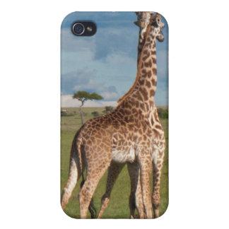 Necking Giraffes iPhone 4 Case
