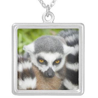 Necklace - Cute Lemur Stripey Tail