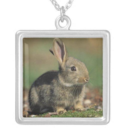 Necklace- Rabbit Square Pendant Necklace