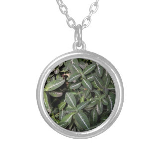 Necklace - Trailing Velvet Plant