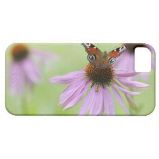 Néctar de consumición de la mariposa de pavo real funda para iPhone SE/5/5s