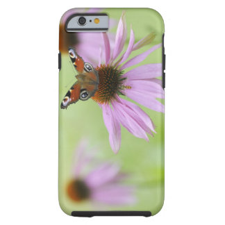 Néctar de consumición de la mariposa de pavo real funda resistente iPhone 6