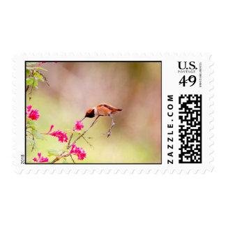 Néctar de la flor del colibrí que sorbe que se sie