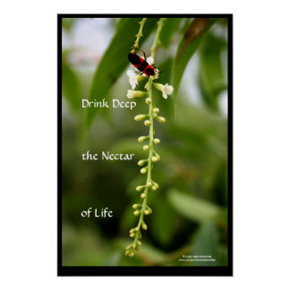 Néctar de la vida póster