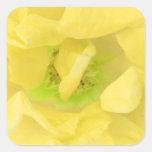 Néctar floral del oro amarillo colcomanias cuadradas personalizadas
