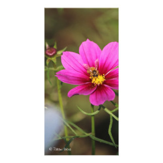 nectar of life (honey of life) cosmos and bees card